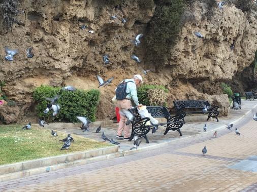 Tämä vanha herra kävi joka aamu ruokkimassa rannan linnut.